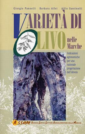 varietà-di-olivo-nelle-marche